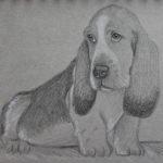 30 minuten schets 'Basset Hound', grafiet + pastel op Strathmore schetspapier