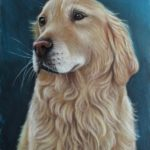 Pasteltekening 'golden retriever', 15x21cm